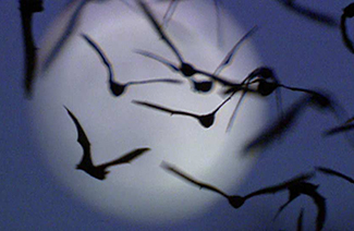 Bats at Night 325x212.jpg