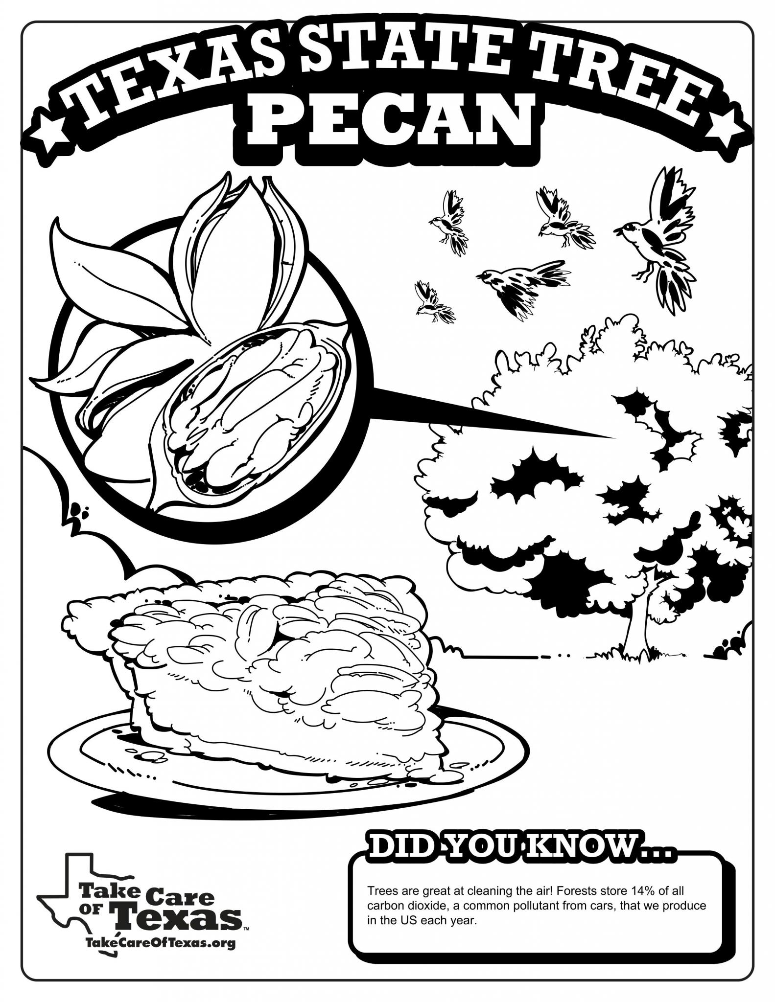 Pecan Coloring Page