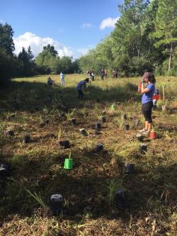 SeaGreen staff participates in a planting event