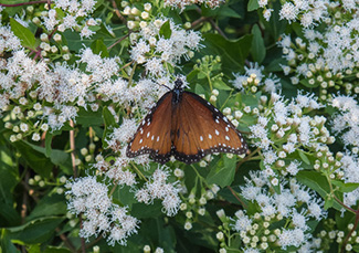 Attracting wildlife to your yard take care of texas selecting plants mightylinksfo