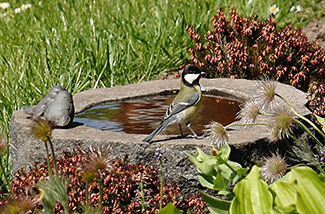bird-bath cropped 325x218.jpg