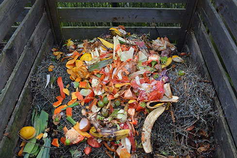 compost pile with fresh food scraps