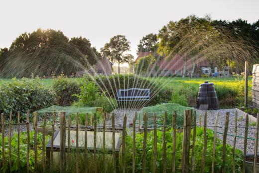 Garden with water sprinkler