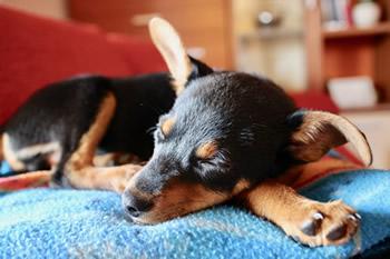 puppy-1977171_1920_0.jpg