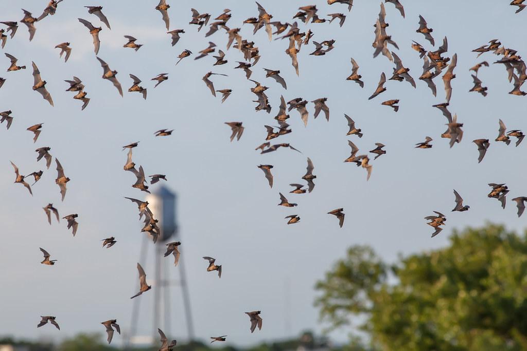 Bats flying across the sky