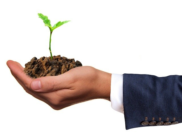 Hand holding dirt and seedling
