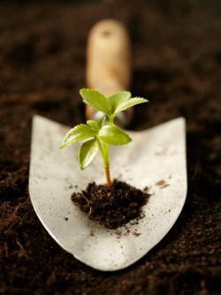 seedling on a trowel