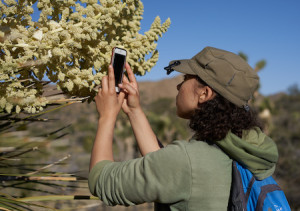 amateur naturalist using the iNaturalist application to identify a plant