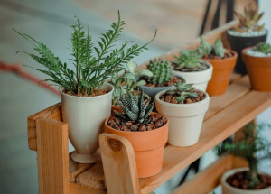 photo of houseplants