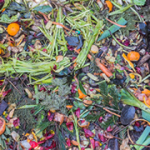 Composting pile of food scraps