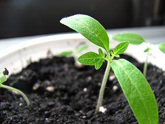 seedling in grow container