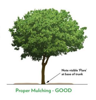 proper tree mulching technique diagram