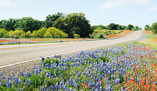 highway with wildflowers and bluebonnets on each side