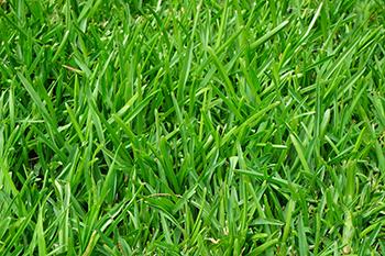 grass-375586 350x233.jpg