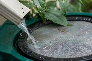 gutter spout pouring into rain barrel