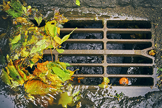 leaves collecting on street rain gutter grate